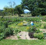 Jardin carré 2